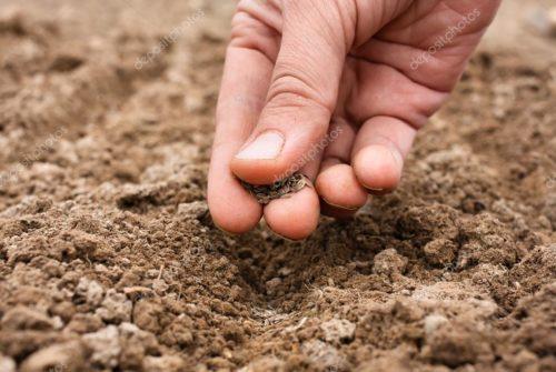 depositphotos_73220209-stock-photo-closeup-of-hand-planting-seeds